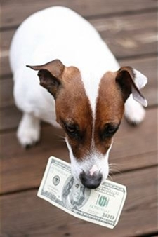 Saving Money With Pets