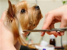 Grooming A Puppy At Home